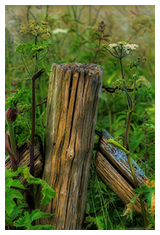 Fence Post is an image from Jim Mead's Flickr photostream at: http://goo.gl/GIjAu